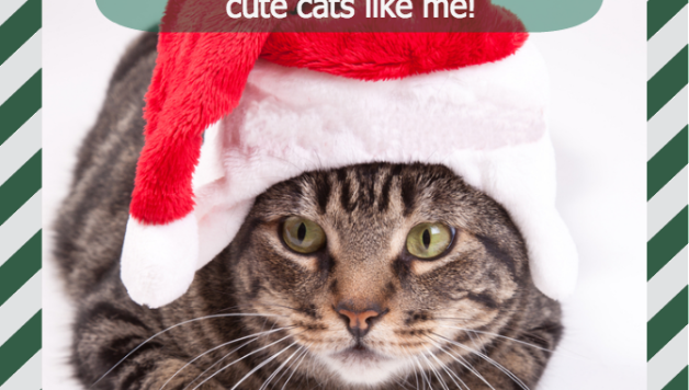 feastivities.santa.cat