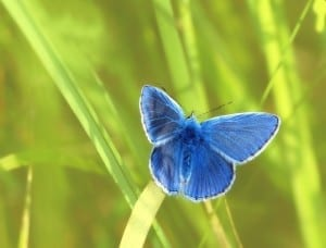 butterfly, 4 mindset shift, transformation, change