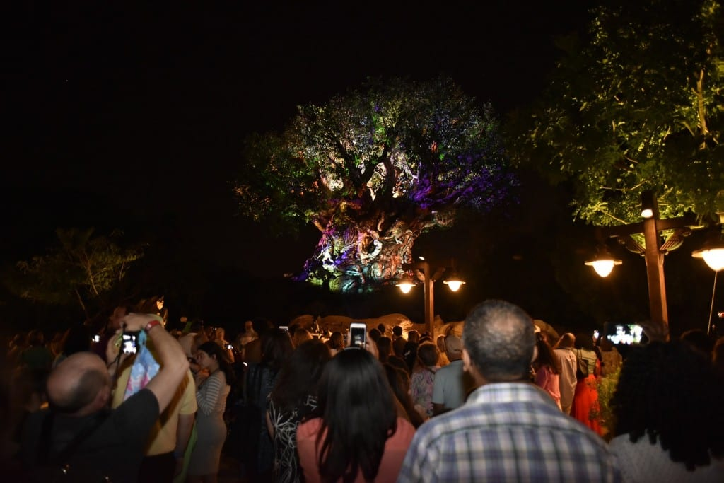 Tree of Life show was absolutely remarkable. We couldn't take our eyes off. Photo credit: